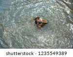 kolkata  india 16 january 2018  ... | Shutterstock . vector #1235549389