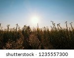 uncultivated field in the... | Shutterstock . vector #1235557300