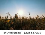 uncultivated field in the... | Shutterstock . vector #1235557339