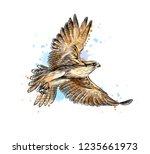 falcon in flight from a splash... | Shutterstock .eps vector #1235661973