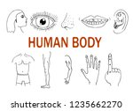 parts of the human body.... | Shutterstock .eps vector #1235662270