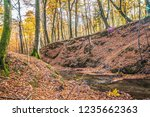a stream in a beech forest in... | Shutterstock . vector #1235662363
