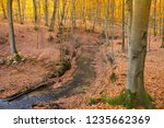 a stream in a beech forest in... | Shutterstock . vector #1235662369