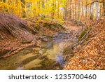 a stream in a beech forest in... | Shutterstock . vector #1235700460