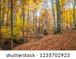 beech forest in autumn | Shutterstock . vector #1235702923