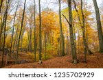 beech forest in autumn | Shutterstock . vector #1235702929
