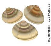 common orient clam   Shutterstock .eps vector #1235925133