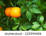 fresh orange 04 | Shutterstock . vector #123594406