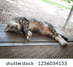 young cat napping on a porch   Shutterstock . vector #1236034153