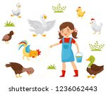 flat vector set of farm birds ... | Shutterstock .eps vector #1236062443