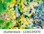 late autumn. frozen autumn... | Shutterstock . vector #1236135370