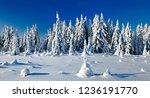 winter wonderland  spruce tree...   Shutterstock . vector #1236191770