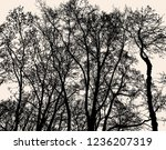 silhouettes of deciduous trees... | Shutterstock .eps vector #1236207319