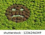 garden of the thabor in the... | Shutterstock . vector #1236246349