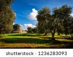 trulli with olive grove. val d... | Shutterstock . vector #1236283093
