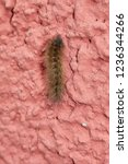 caterpillar walking on wall   Shutterstock . vector #1236344266