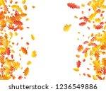 oak  maple  wild ash rowan... | Shutterstock .eps vector #1236549886