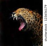 portrait of a leopard | Shutterstock . vector #123656179