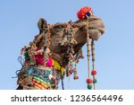 decorated head of a camel in... | Shutterstock . vector #1236564496