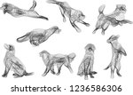 multiple dogs in various poses... | Shutterstock .eps vector #1236586306