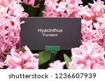 "info plate ""hyacinth fondant"" ...   Shutterstock . vector #1236607939"
