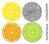 hand drawn citrus lemon.vector... | Shutterstock .eps vector #1236628549