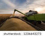 pouring soy bean grain into... | Shutterstock . vector #1236643273