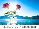 roses in front of the tegernsee lake - bavaria - germany - stock photo