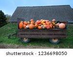 Trailer Full Of Fresh Pumpkins. ...