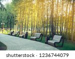 benches in the park.summer...   Shutterstock . vector #1236744079
