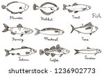 Stock vector types of fish hand drawn vector illustration sardine codfish mackerel herring halibut 1236902773