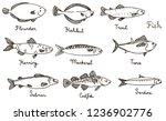 Stock photo types of fish hand drawn illustration sardine codfish mackerel herring halibut flounder 1236902776