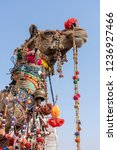 decorated head of a camel in... | Shutterstock . vector #1236927466
