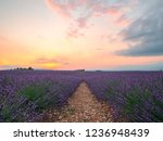 endless rows of blooming... | Shutterstock . vector #1236948439