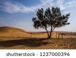 The Desert Of Saudi Arabia...