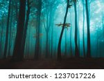 lonely tree in foggy forest... | Shutterstock . vector #1237017226
