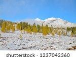 winter landscape on the high... | Shutterstock . vector #1237042360