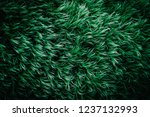 Abstract Thick Green Moss ...