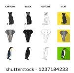 black rhinoceros  panther wild...   Shutterstock . vector #1237184233