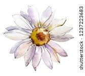 Daisy Flower. Floral Botanical...