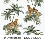 beautiful tropical vintage... | Shutterstock .eps vector #1237342309