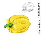 yellow sweet pepper isolated... | Shutterstock .eps vector #1237370173