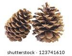 Two Ponderosa Pine Cones Macro...