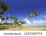 coconut trees on tropical beach | Shutterstock . vector #1237439773