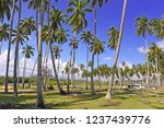 coconut trees on tropical beach | Shutterstock . vector #1237439776
