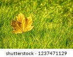 background of autumn maple leaf ... | Shutterstock . vector #1237471129