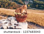 picnic lunch with landscape... | Shutterstock . vector #1237683043