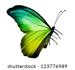 Green Yellow Butterfly  ...