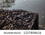 gabions at jubilee lake royal... | Shutterstock . vector #1237808626