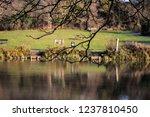 jubilee lake royal wootton... | Shutterstock . vector #1237810450